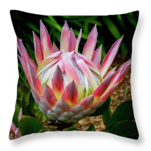 Protea Flower of Hawaii, Throw Pillow, fine art... - $41.99 - $69.99