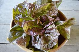 Roque D'Hiver Lettuce Seeds - 100 Count Seed Pack - Non-GMO - A Sweet, Large, Fl - $2.99