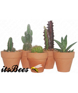 "Mini Cactus Terracotta - Assorted in 2"" Clay Pots - Succulent - Wedding,... - $4.00"
