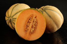 BEST PRICE Tuscan Cantaloupe - Super-Sweet, AM DIY Home Garden Fruits 10... - $23.99