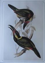 BEAUTIFUL BIRD PRINT ~ GUYANA TOUCANET ~ JOHN GOULD - $50.36