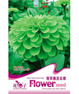 Riginal pack 30 seeds green garden youth and old age common zinnia zinnia elegans a039 thumbtall