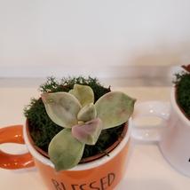 Succulents in Espresso Mug Planters, Set of 3, ceramic Thankful Grateful Blessed image 8