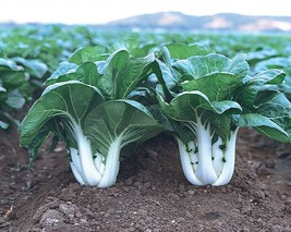 Cabbage Seeds - Pak Choi White Stem - Gardening - Outdoor Living - FREE SHIPPING - $28.99+