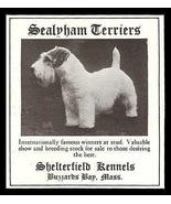 Sealyham Terriers Shelterfield Buzzards Bay Ma 1929 Photo Ad Dog - $10.99
