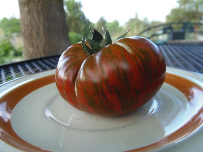 Banded Amazon tomato seed