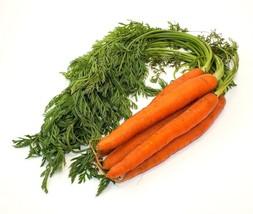 Carrot Danvers 126 Non GMO Heirloom Garden Vegetable Seeds Sow No GMO® USA - $1.97+