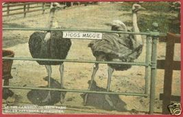 S Pasadena Ca Cawston Ostrich Farm Postcard B Js - $7.50