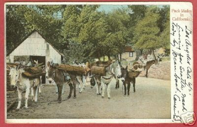 Primary image for PACK MULES CALIFORNIA Rieder Postcard 1907 BJs