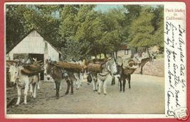 PACK MULES CALIFORNIA Rieder Postcard 1907 BJs - $8.00