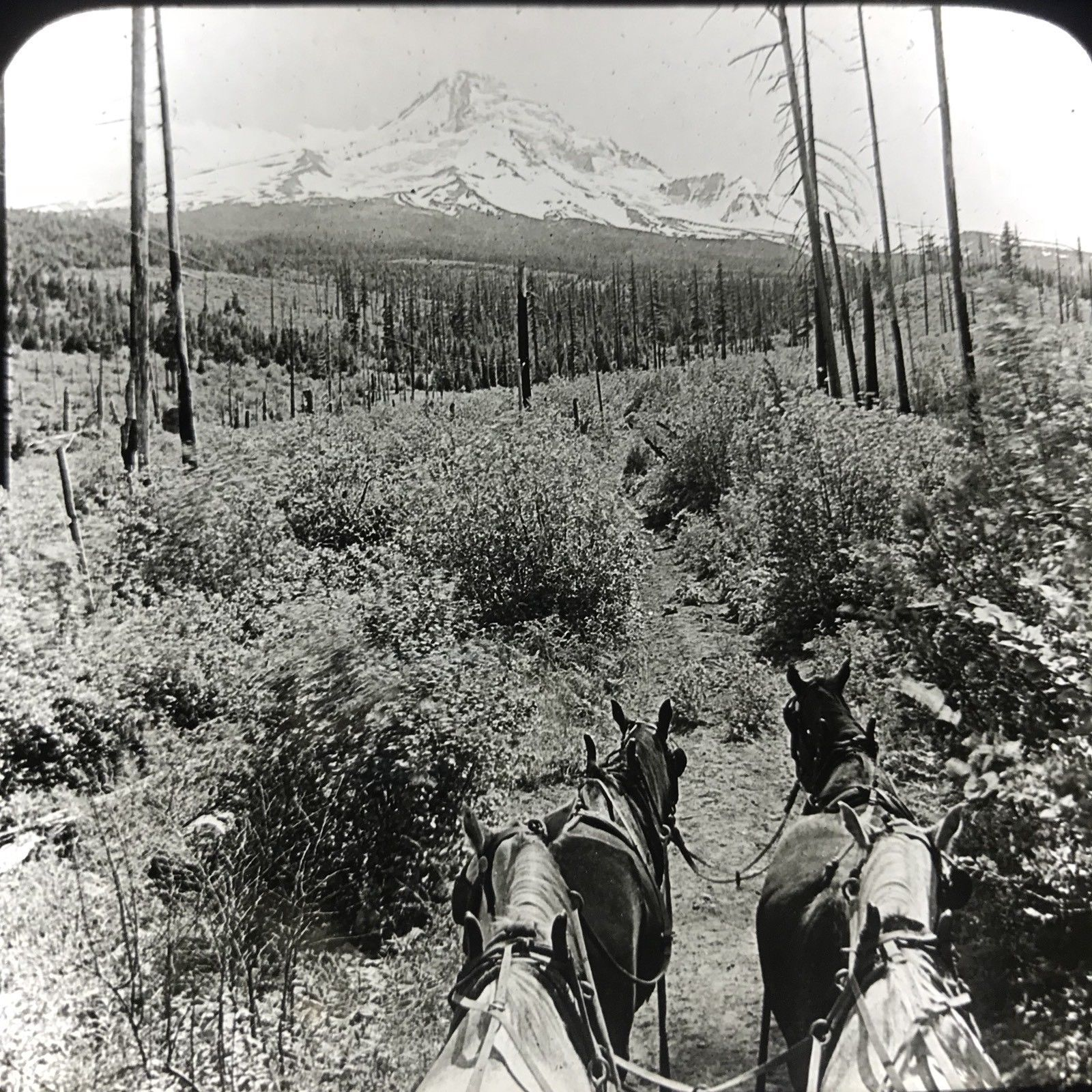 Vtg Magic Lantern Glass Slide Photo Keystone Mount Hood Cascades Oregon