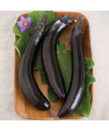 Orient Express Eggplant Seed, Vegetable Seeds, Ship From US - $16.00