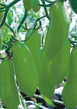 20pcs Very Delicious Rare Green Banana Tomato Seeds Fruit Vegetable Seeds IMA1 - $13.99