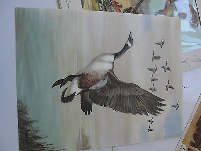 Portfolio of Prints, Ideals Gallery, Grouse, Goose, Pheasant, Duck, old