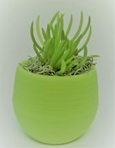 "Senecio Succulent in Green Self-Watering Pot, Live Plant Barberton 3"" Planter"