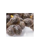 5  Organic Papaya Seeds, Non-GMO - $2.95