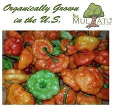 Fresh Peppers or Dried Organic Aji Dulce Peppers - Dreid Basil, Homemade... - €1,62 EUR