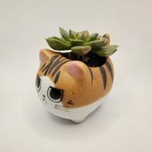 "Graptoveria Olivia Succulent in Cat Planter - 2.5"" Kitty Kitten Ceramic Pot image 7"