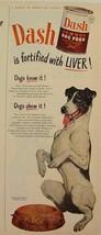 1949 Smooth FOX TERRIER Dash Dog Food Print Ad - $9.99