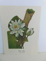 Water Lily (Nymphaea Odorata)  9x12 Frameable Print Nature Flower - $11.75
