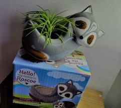 "Live Air Plant in Raccoon Animal Planter, 5"" grey glazed ceramic pot image 6"