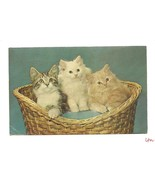 Three Fluffy Friendly Kittens Cat in Basket Plastichrome Photographic PC - $6.95