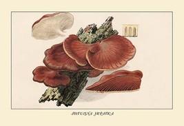 Fistulina Hepatica by W. Hamilton Gibson - Art Print - $19.99+