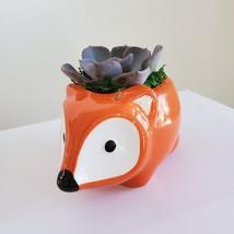"Echeveria Morning Beauty in Fox Planter, Live Succulent Plant in 5"" Orange Pot image 5"