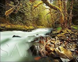 Creek Photograph 8X10 New Fine Art Color Print Picture Photo Nature Fore... - $7.66