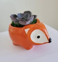 "Echeveria Morning Beauty in Fox Planter, Live Succulent Plant in 5"" Orange Pot image 1"