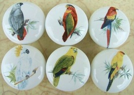 Cabinet Knobs W/ Parrot Macaw Cockatoo Tropical Birds #2 - $31.75