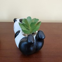 """Panda Animal Planter with Faux Succulent, Cement Pot and Artificial Plant, 4"""" image 3"""