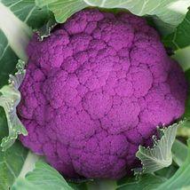 SHIP From US, 50 Seeds Graffiti F1 Hybrid Cauliflower, DIY Healthy Vegetable AM - $33.99