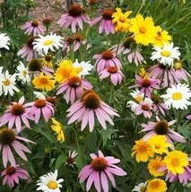 Non GMO Bulk Partial Shade Wildflower Seed Mix (1/2 lb) 260,000 Seeds - $38.56