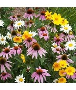 Non GMO Bulk Partial Shade Wildflower Seed Mix (1/2 lb) 260,000 Seeds - $38.56