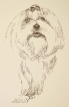 Maltese Dog Breed Art Print #58 Stephen Kline Signed Magic Drawing from Words - $49.95