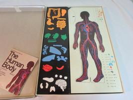 Colorforms Human Body Man Male Set Biology Physiology Vintage 1970 - $26.70