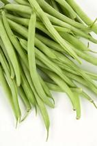 Bean Seeds, Bush, Provider, Non GMO, Heirloom, Home Garden, Vegetable 25 Seeds - $1.97