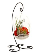 """Bliss Gardens Air Plant Terrarium Kit With 8"""" Oval Glass/Geode Crystal/S... - $65.81"""