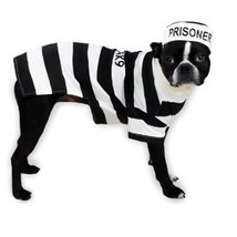 Casual Canine Prison Pooch Costume, X-Small - £11.51 GBP