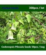 Is pilosula seeds  poor man s ginseng seeds  health care function dang shen seeds  11  thumbtall