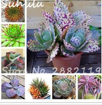 Mixed aloe seeds exotic perennial beautiful flowering plant rare herb ca... - $3.76