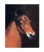 """""""Baby Face"""" - Head of a Foal - 6 Pack of Blank Cards - Print by Jean Bar... - $12.95"""