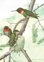 1936 Color Bird Plates 65 66 Louis Agassiz Fuertes Hummingbird Nighthawk... - $19.23