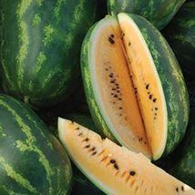 BEST PRICE 20 Seeds Orange Tendersweet Watermelon,DIY Watermelon Seeds E... - $4.99