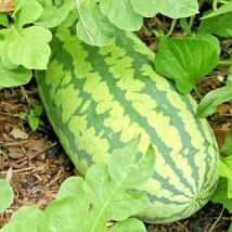 25+CONGO WATERMELON Seeds XXL Extra Sweet Non-Gmo Organic HUGE 30-50lbs ... - $2.50