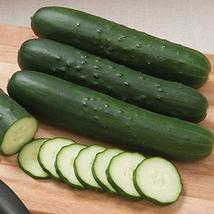Cutter F1 Hybrid Cucumber Seeds (50 Seeds) - $5.67