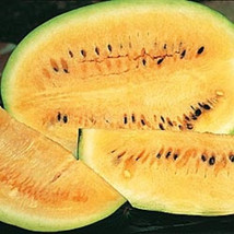 10 Desert Watermelon Seeds-1158 - $2.98