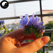 Buy Echium Vulgare Flower Seeds 200pcs Plant Blue Flower Garden Echium - $9.99