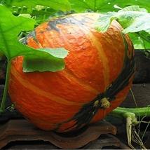 8 Seeds/Bag Pumpkin Seeds Vegetable Bonsai Huanan White Melon Seed Edible Plants - $3.55